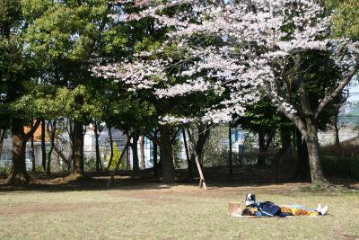 桜の木の下に犬と家族